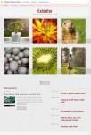 Pro Theme Design Exhibitor Theme For WordPress Portfolio and Gallery